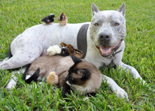 Image of many Birds resting on a large Dog and Cat