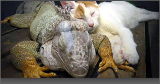 Image of Lizard and Cat Sleeping